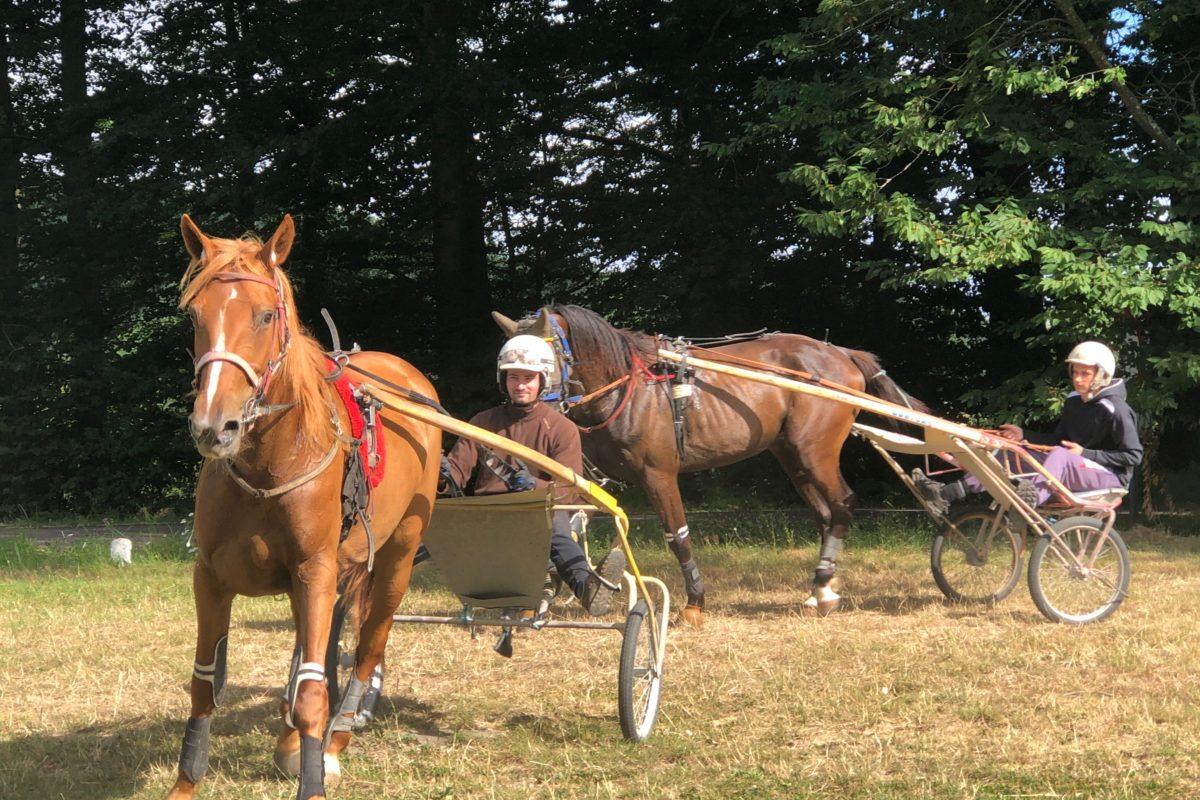 Intervention dans un haras pour chevaux de course.